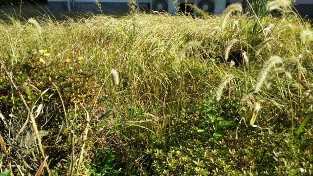 除草するなら基本を学ぶ!除草剤の目的を明確にして予防もバッチリ