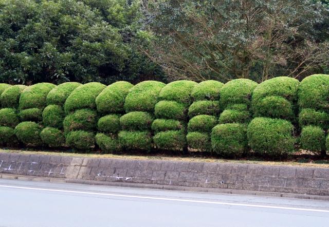 お庭の生け垣をきれいに育てるポイントとおすすめの樹木