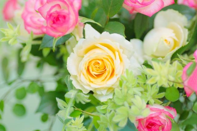 こんなときどうする?バラの状況、希望に合わせた剪定方法を紹介!