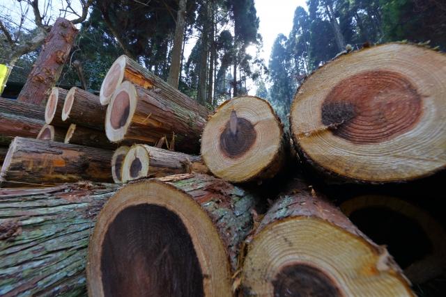 杉の伐採で必要なものと適切な時期