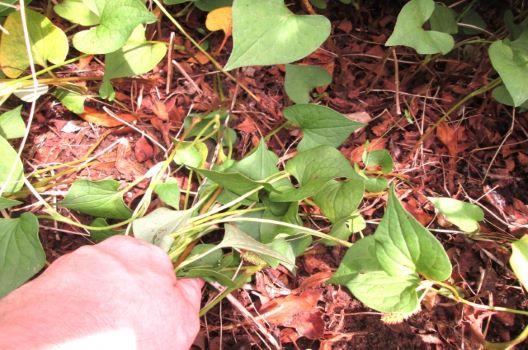 草むしりでおさえるべきコツを紹介!使いやすい道具でラクな雑草対策
