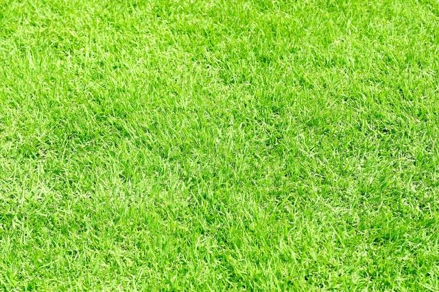 高麗芝の手入れは簡単!水やりや芝刈りの頻度、適切な植え方をご紹介
