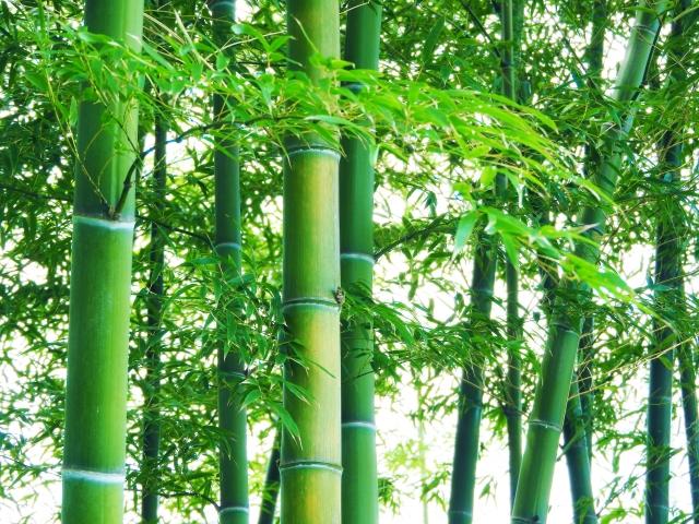 竹の駆除は根が重要!何度も生えてくる竹の駆除方法や処分について