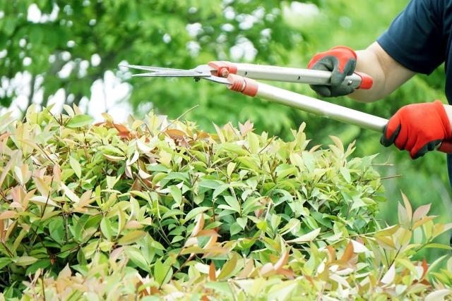 植木屋さんに依頼する時期を間違わないための基礎知識!剪定の方法と適した時期