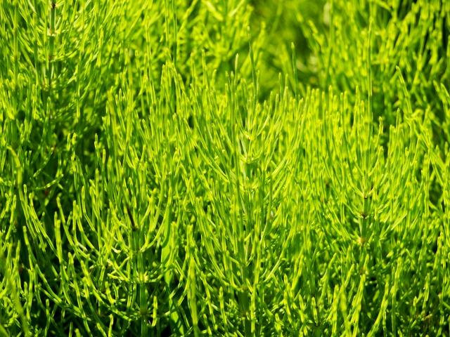 畑の雑草はなぜ生えるの?雑草の種類や駆除~対策までの流れをご紹介