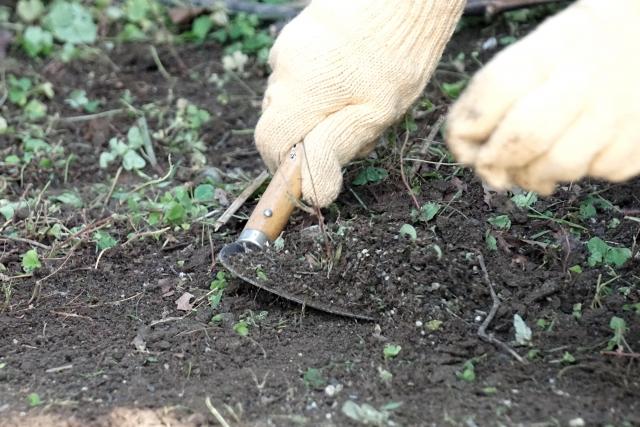畑に雑草が生えたら!駆除~対策までの流れ