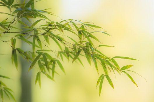 細い竹や笹の駆除方法|どちらも放置すると危険?早めに対処しよう