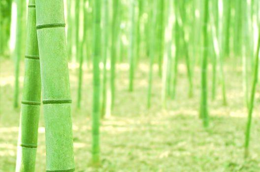 竹や笹の防除がうまくいかない理由