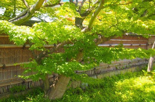 和モダンの庭はDIYでつくれる?素敵な庭にするための秘訣をご紹介