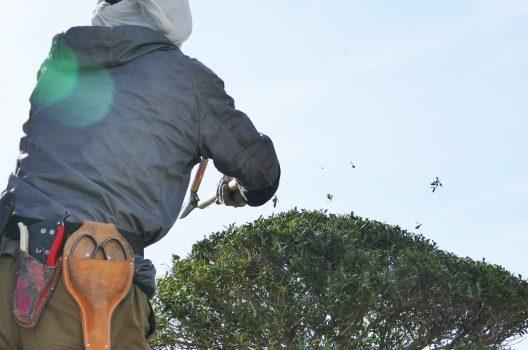 大きな庭木の伐採は業者に依頼をするのが安心!
