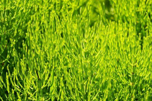 1年草と多年草とは?