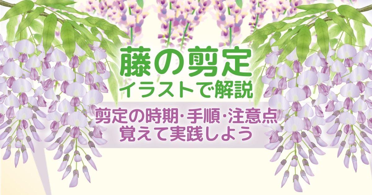 藤の剪定の時期・方法を解説!正しい手入れできれいな花を咲かせよう