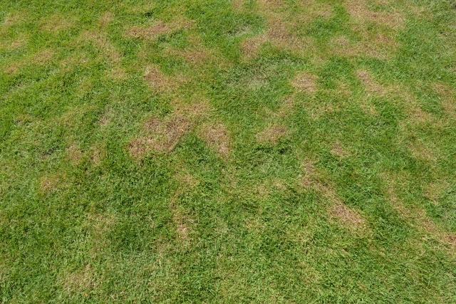 芝生が枯れる、傷む原因とは?