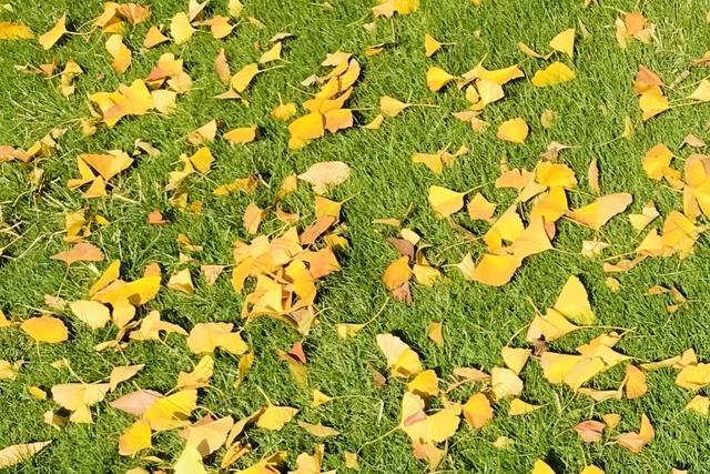 冬枯れた庭の芝をグリーンにする方法