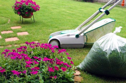 庭の芝生費用|種類・貼り方などで変わる価格と美観を保つお手入れ法
