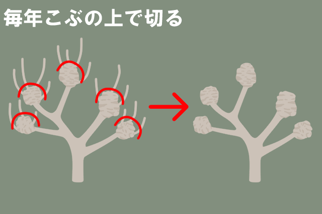 剪定方法2