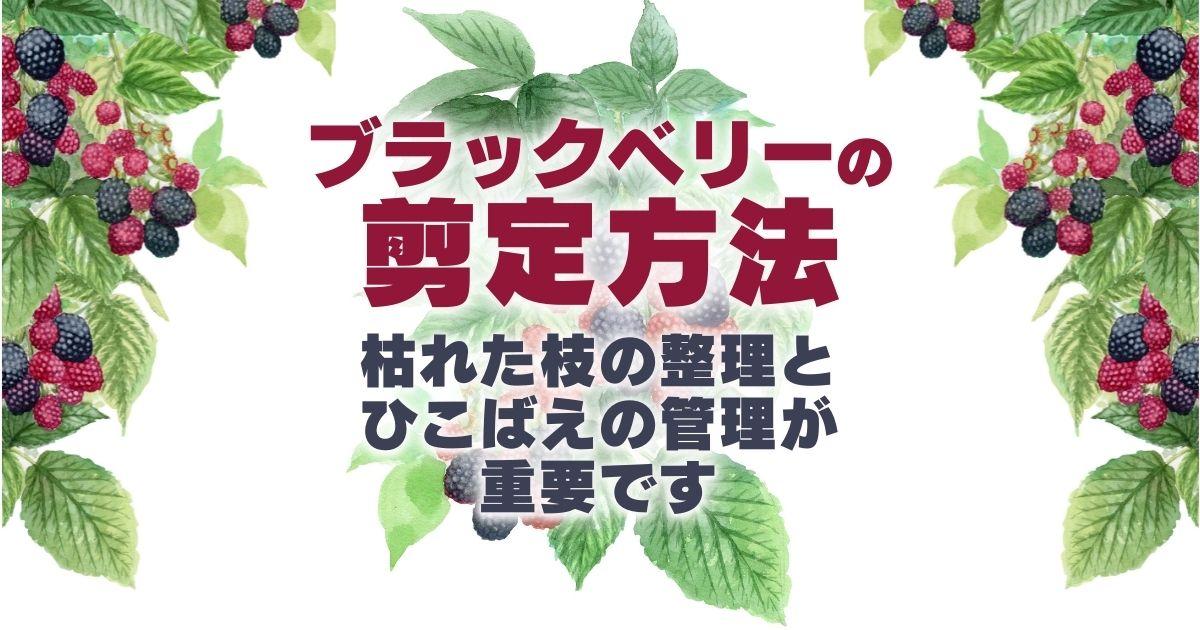 ブラックベリーの剪定方法と育て方|甘酸っぱい果実が庭いっぱいに!