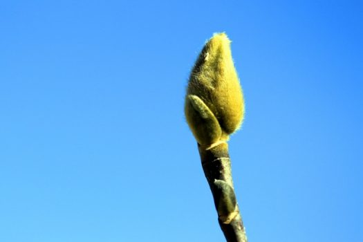 庭木・鉢植えでの育て方