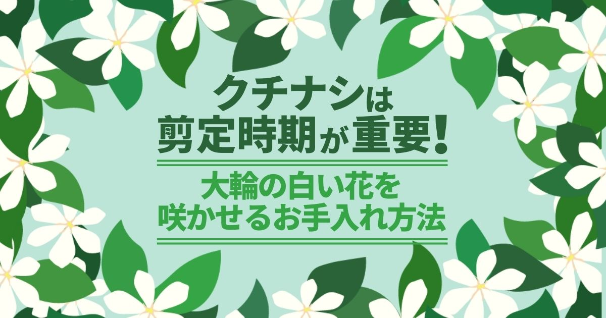 クチナシは剪定時期が重要!大輪の白い花を咲かせるお手入れ方法