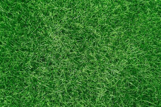 芝生には2種類ある