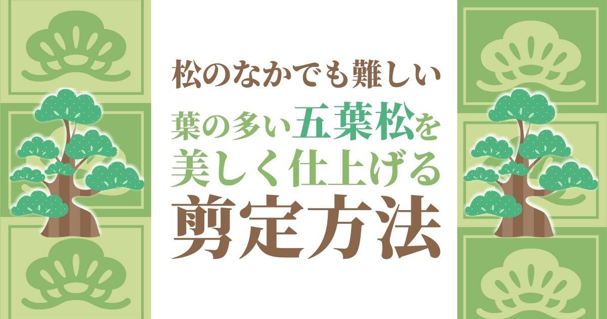 五葉松の剪定方法は3種類!みどり摘み・もみあげ・透かし剪定とは