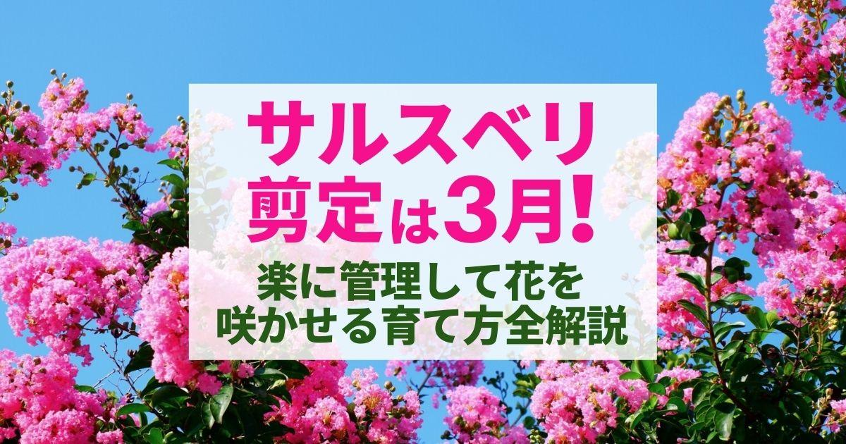 サルスベリ剪定は3月! 楽に管理して花を咲かせる育て方全解説