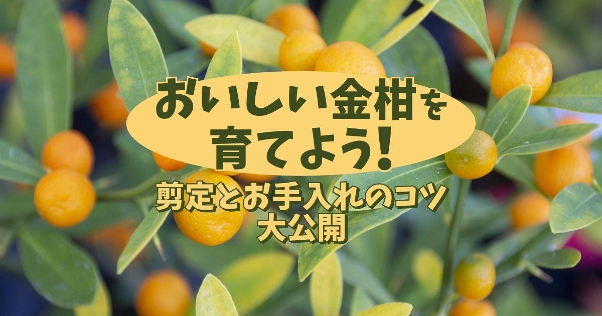 おいしい金柑を育てよう剪定とお手入れのコツ大公開!