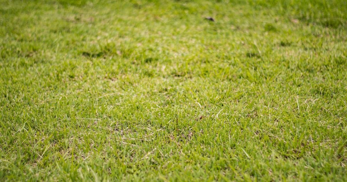 芝生の手入れをしよう!キレイに保つ方法・注意する病気や害虫も紹介