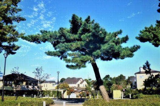 樹形の種類は自然樹形・人工樹形