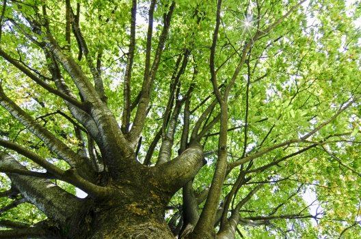 木の高さ・幹の太さ