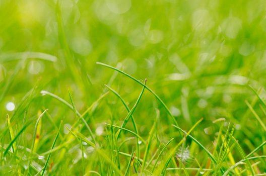 【芝生の除草剤の選び方】3つのポイント