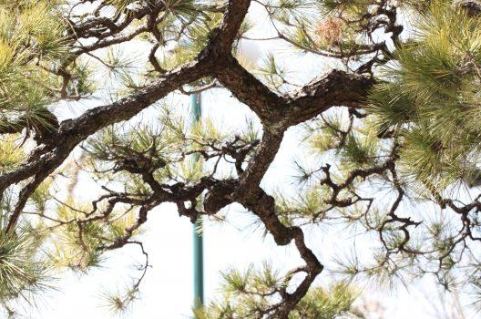 庭木伐採のすべて|不要木の放置リスク、伐採費用、一連の流れを解説