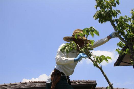 【植木剪定】業者を選ぶポイント