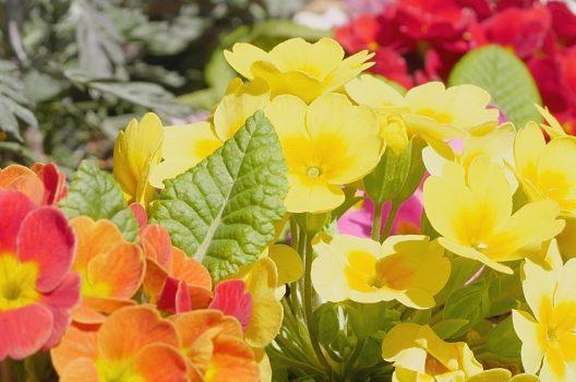 花壇の植物を上手に育てるならプロに依頼をしよう!