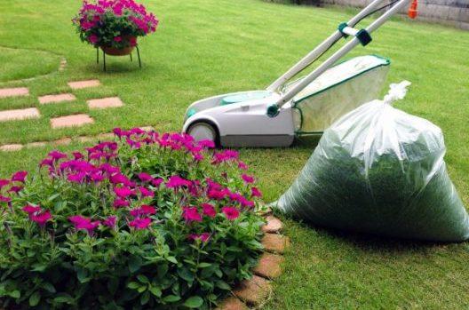 高麗芝をお手入れして美しいお庭を!芝刈りのやり過ぎには注意が必要