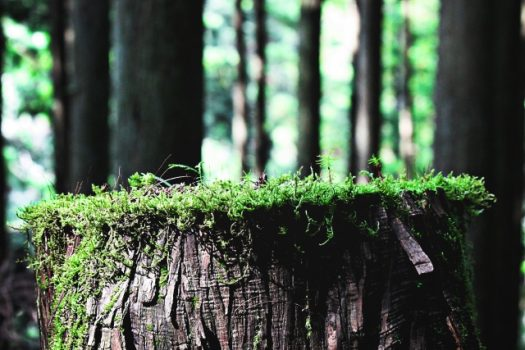 庭木の伐採費用相場を解説!よくある疑問やDIYの伐採方法まで