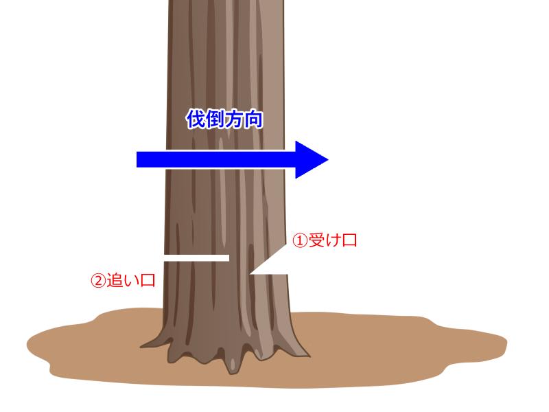 伐採の流れ