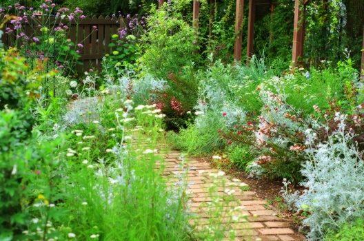 庭で植物を育てよう!【花壇で育てる植物】