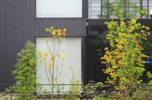庭の植物|シンボルツリーや目隠しになる植木などオススメしたい種類