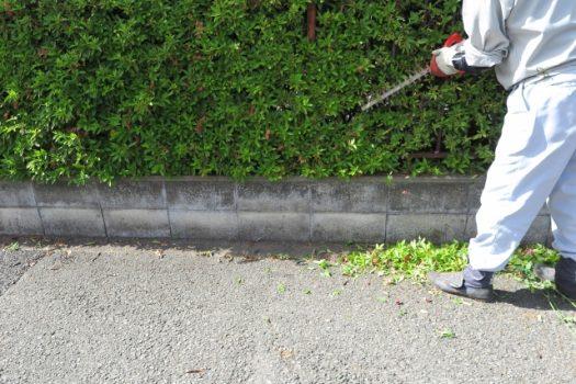 植木剪定の業者選びのポイント|料金・サービス内容・剪定事例まとめ