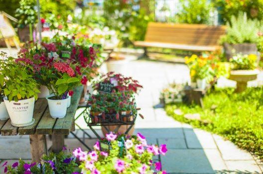 庭掃除と除草のコツを解説!お手入れをして美しい景観を保とう
