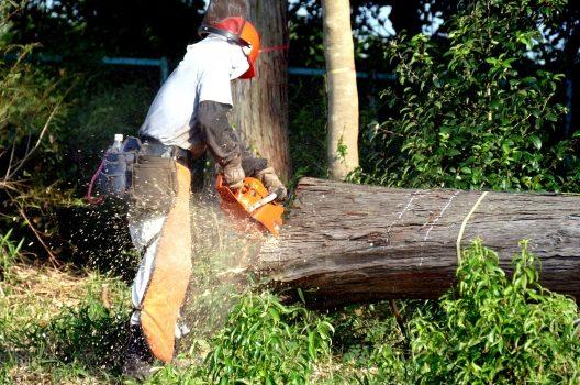 かかり木が発生した場合は要注意!対処する手順や方法を詳しく解説
