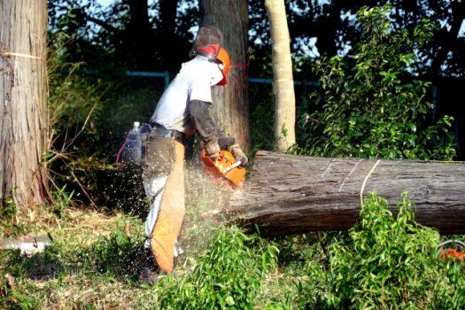 木の伐採費用と安く抑えるポイント!自分でできる基準と業者の選び方