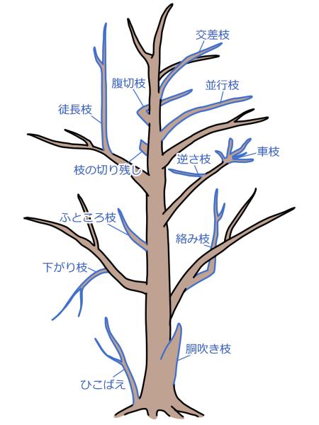 【剪定する枝の見分け方・コツ】