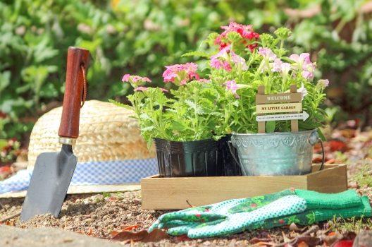 庭の花壇で育てるならこんな植物がオススメ!