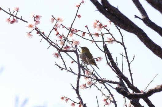 誘鳥木ってなに?鳥が遊びにくる木を植えてお庭づくりを楽しもう