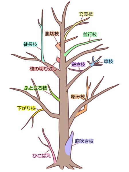 剪定する枝の見分け方