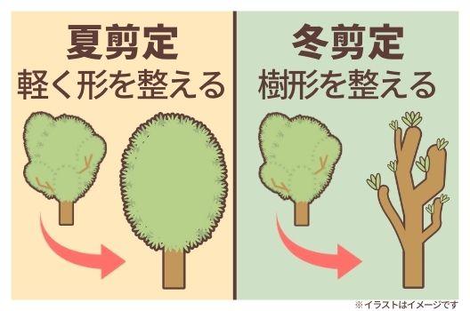 剪定は年に2回!庭木17種類の剪定時期一覧表