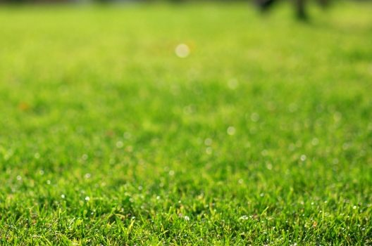 芝生の雑草にウンザリ!そんなあなたへ知ってほしい雑草対策