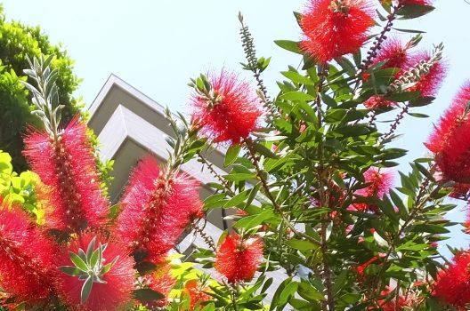 低木の種類3:気軽に楽しむ!鉢植えタイプ